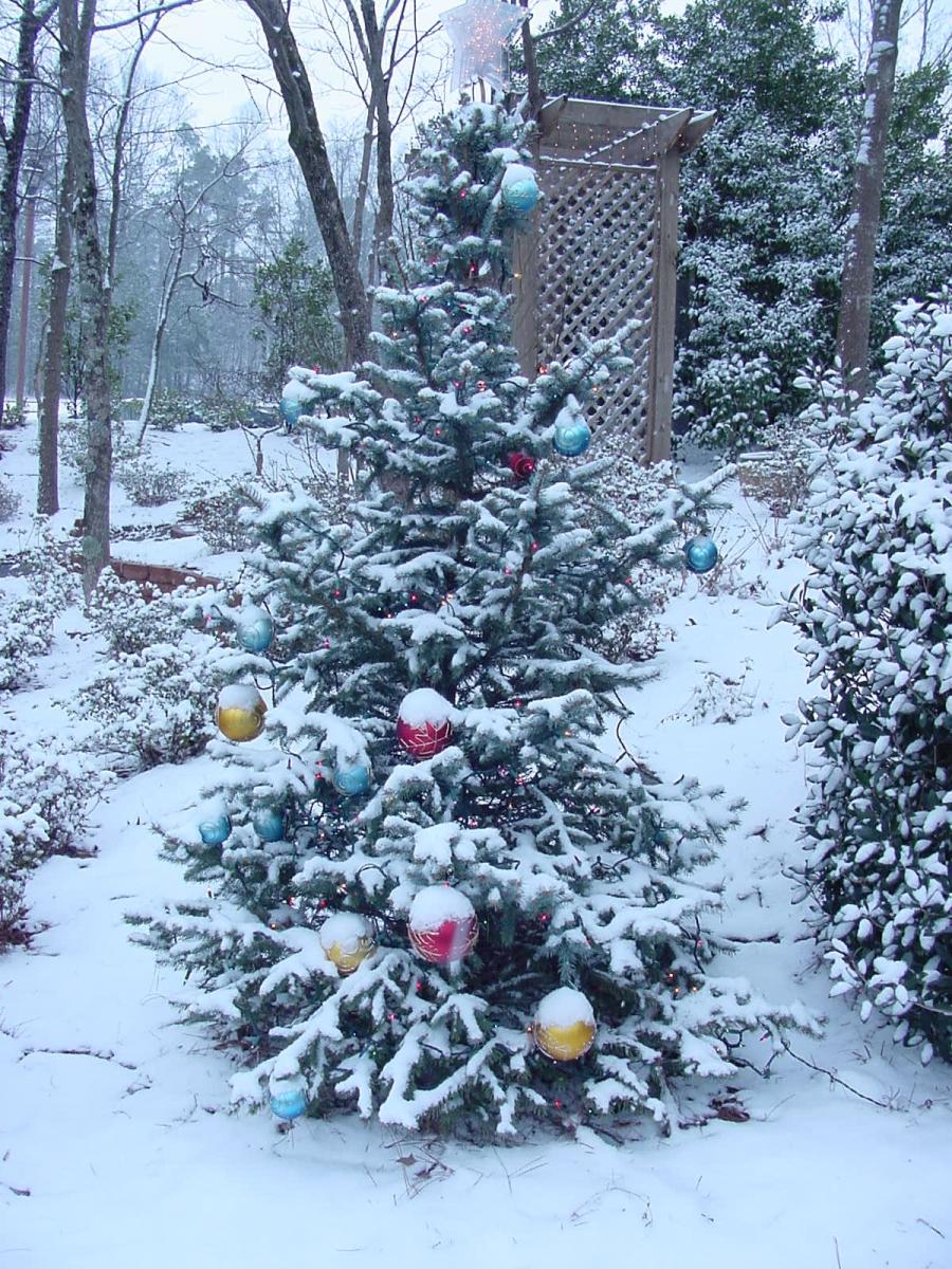 cristmastree-snow